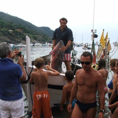 OT-A13635_pescaturismo_squalo_800x800