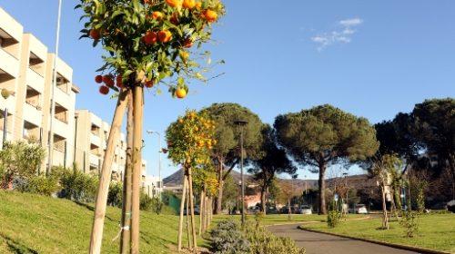 Parco urbano Paolo Sterza